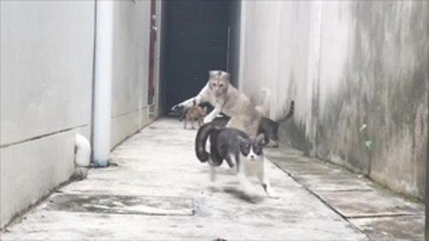 ทำไมยอดวิวพุ่งเกือบล้าน กับแค่คลิปการกระโดดของเจ้าแมวเพียงแค่ 3 วินาทีเท่านั้น