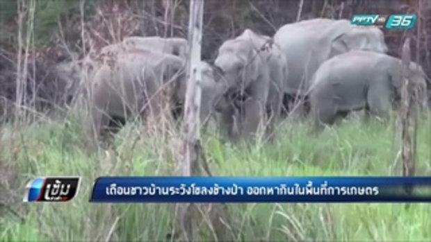 เตือนชาวบ้านระวังโขลงช้างป่า ออกหากินในพื้นที่การเกษตร - เข้มข่าวค่ำ
