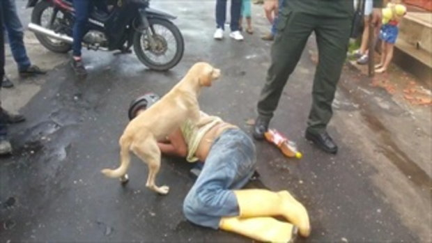 ขี้เมาก็รัก! ชายนอนเมาแอ๋กลางถนน เจ้าตูบเข้าปกป้อง ห้ามใครยุ่งแม้แต่ตำรวจ