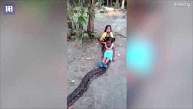 แชร์สนั่น เด็กน้อยใจกล้า เล่นกับงูเหลือมไซส์ยักษ์