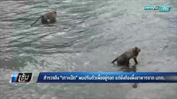 """สำรวจลิง """"เกาะเป็ด"""" พบปรับตัวเพื่ออยู่รอด แต่ยังต้องพึ่งอาหารจากนักท่องเที่ยว - เข้มข่าวค่ำ"""
