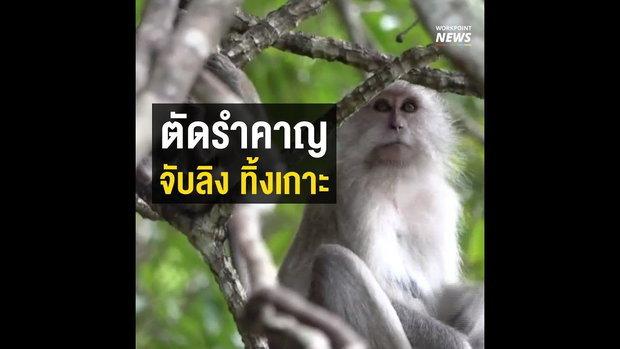 แก้ปัญหากวนคน จับลิงปล่อยเกาะ