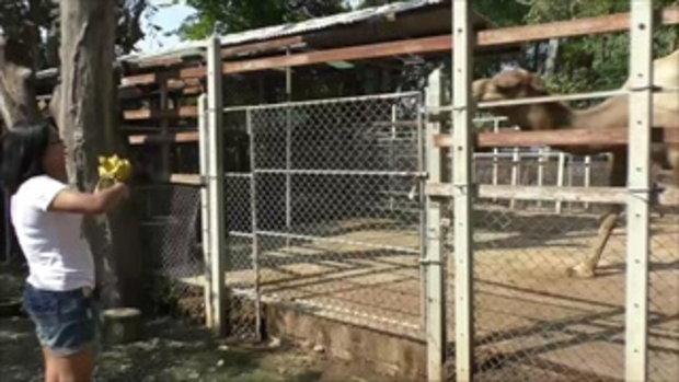 สวนสัตว์วัดดังแจง ดราม่า