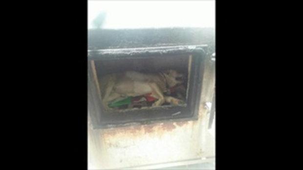พระลำปางวิงวอนช่วย หมาถูกทิ้งทยอยล้มตาย อดอยากอาหารเกลี้ยง
