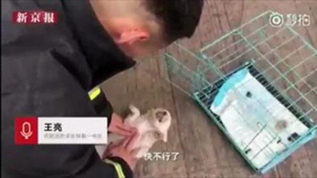 ไฟไหม้ร้านขายสัตว์เลี้ยง ดับเพลิงทำ CPR ช่วยลูกหมา-แมวถูกขังกรง พบตาย 3 ตัว