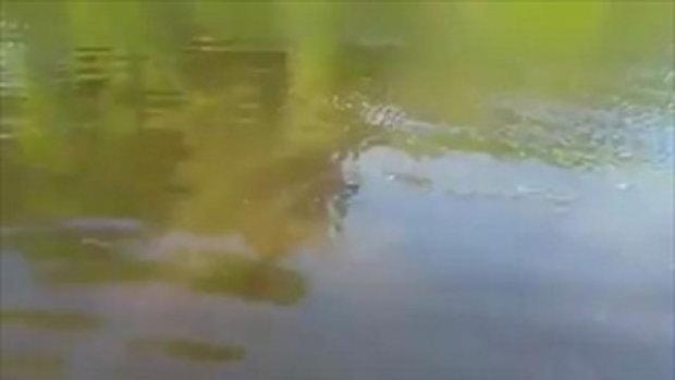 ต้องใจกล้าแค่ไหน! ลงไปว่ายน้ำถ่ายเซลฟี่ กับจระเข้ยักษ์ จะพลาดมั้ย อะไรก็เกิดขึ้นได้