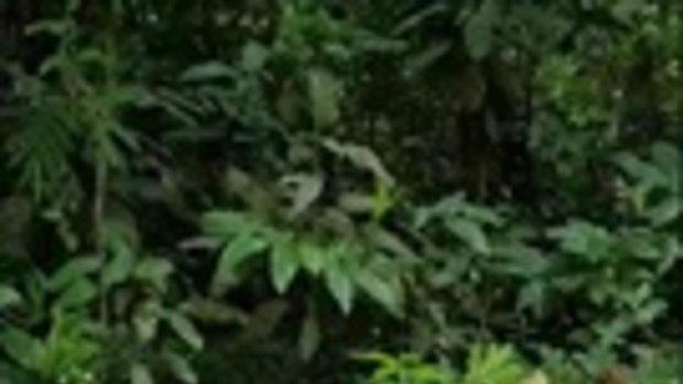 คลิปวินาทีชีวิต หมาน้อยเกือบตายโดนงูเหลือมรัด