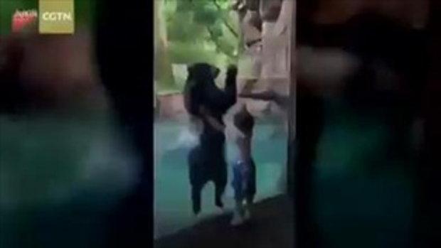 สุดน่ารัก เด็กชาย 5 ขวบ กระโดดโลดเต้นคู่หมีแว่น