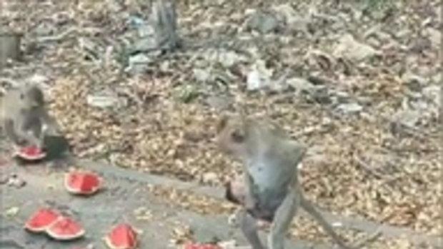 งง กับลิงสรุปลิงทำอะไร ?