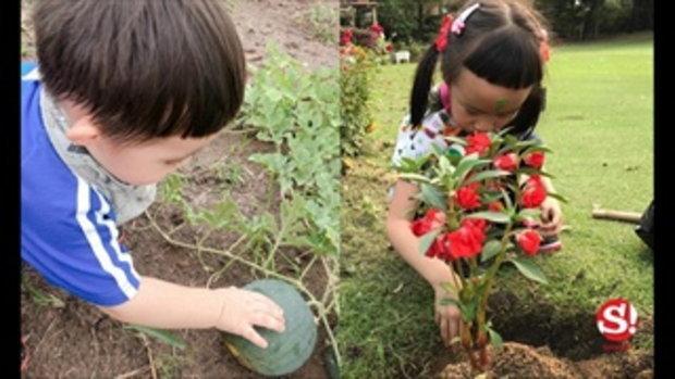 เปิดอาณาจักร ผักผลไม้ หลังบ้าน เสี่ยตา ปัญญา ออกผลให้กินได้ตลอดทั้งปี