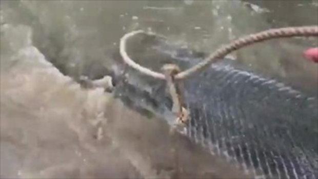 ตกไปตกมา! ผง่ะ เจอปลาอัลลิเกเตอร์ยักษ์ ยาวกว่า 8 ฟุต มาติดเบ็ด ใหญ่จริงอะไรจริง