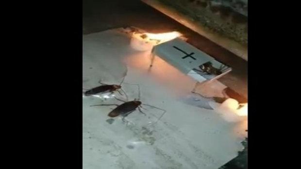 แบบนี้ก็มี หนุ่มจัดฌาปนกิจศพ 'แมลงสาบ'
