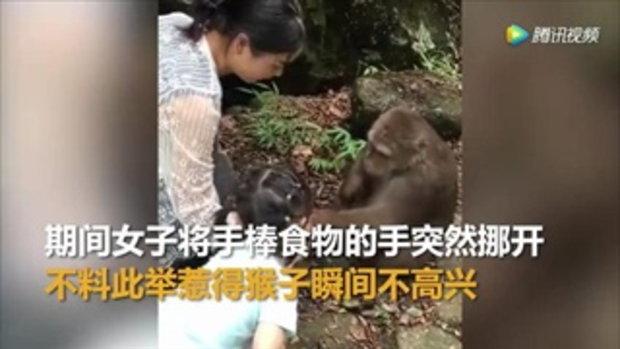 ลิงโหด ต่อยหนูน้อยล้มตึง ขณะยื่นมือป้อนอาหารให้