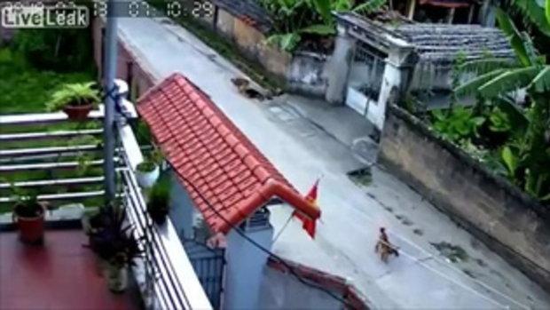 วัยรุ่นจีนใจเหี้ยม เอาเชือกลากคอสุนัขไปกับถนน