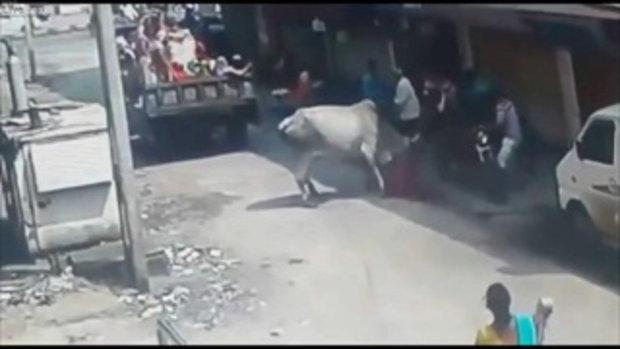 วัวคลั่งไล่ทำร้ายคน