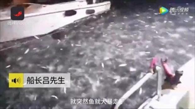 โอ้โห! เผยคลิปชวนตื่นตา ฝูงปลานับหมื่นในไต้หวัน พากันกระโดดขึ้นเรือเอง
