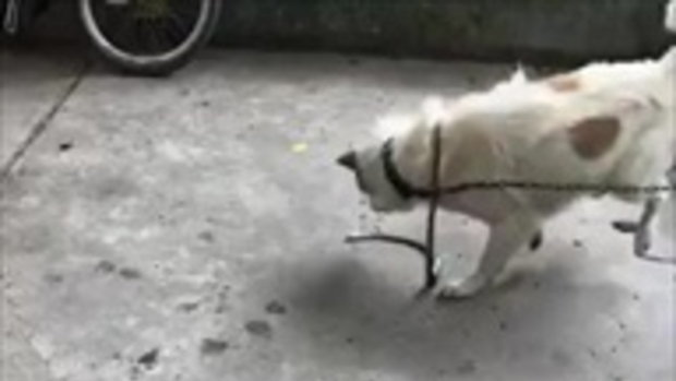 สวยพี่สวย ! หมาเล่นงูเขียวถึงตาย เจ้าของชมไม่ทันขาดคำ สุดท้ายแตก 1 กรี๊ดลั่น!