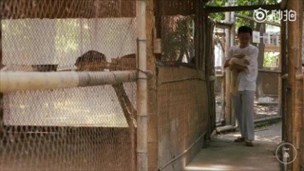 น่านับถือ อาจารย์จีนเปิดบ้านดูแลสัตว์ 200 ชีวิต ไถ่จากร้านอาหารพิสดาร-ตลาดมืด