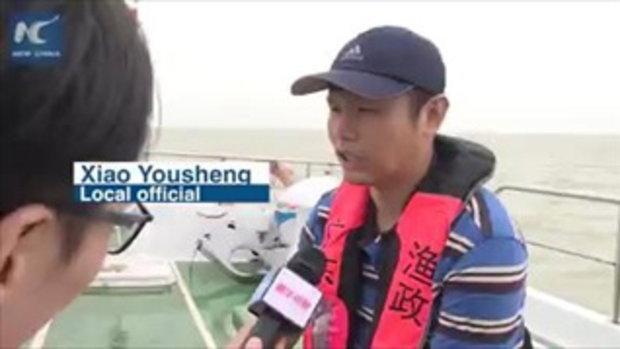 """เกรงกระทบเจ้าถิ่น สะพานฮ่องกง-จูไห่-มาเก๊า ใช้ """"นักอนุรักษ์"""" ประกบวิศวกรตลอดการก่อสร้าง"""