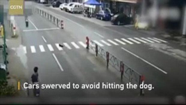 หญิงจีนช่วยสุนัขเป็นลมกลางถนน สุดท้ายถูกรถบรรทุกชนกระเด็น
