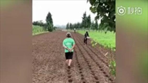เพราะทุกที่คือรันเวย์ ลุงชาวสวนจีนโชว์สเต็ปเดินทำหลุมปลูกผักสุดเป๊ะ