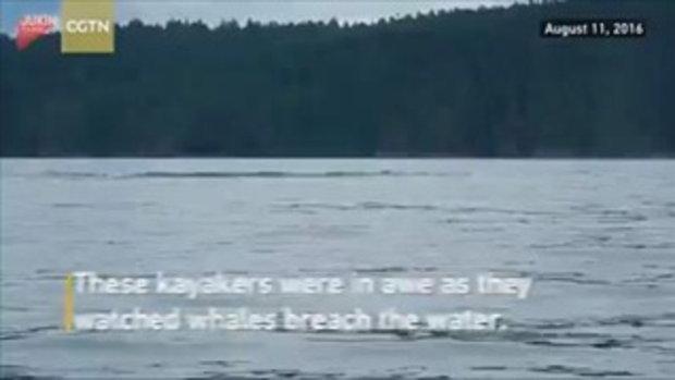 สองนักท่องเที่ยวหวิดโดนทับตาย หลังพายเรือไปดูวาฬหลังค่อมโผล่พ้นน้ำ