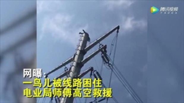 ชาวเน็ตประทับใจ จนท.การไฟฟ้าจีนปีนเสาไฟฟ้าช่วยชีวิตนกติดสายไฟ