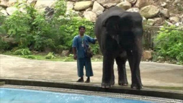 เขาเขียวเปิดสวนสัตว์ โต้สื่อนอกยืนยันไม่มีการทารุณโชว์ช้าง