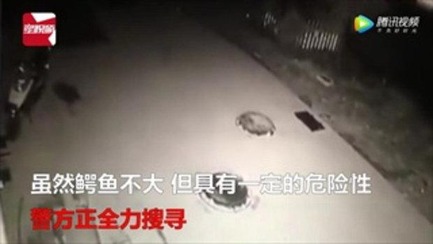 ตำรวจจีนเร่งตามหา เจ้าเข้หนีตายออกจากภัตตาคาร คาดไม่อยากถูกกิน