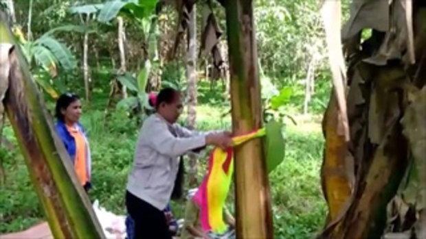 ชาวบ้านแห่ขอหวย ต้นกล้วยออก 2 ปลีในเครือเดียว เชื่อให้โชค