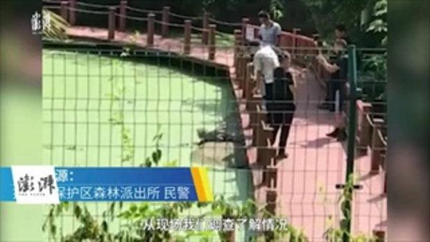 วิจารณ์เละ นักท่องเที่ยวมือดัน-เท้าเตะจระเข้ตีนเป็ดจีนในเขตอนุรักษ์