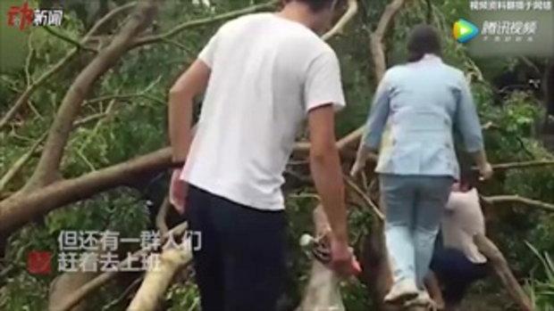 สายแล้ว! ชาวกวางตุ้งแห่ปีนข้ามต้นไม้หักโค่นไปทำงาน หลังไต้ฝุ่นมังคุดพัดผ่าน