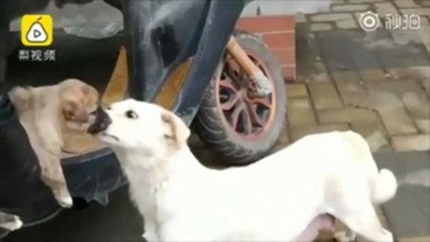 """ดูแลตัวเองดีๆ นะ """"แม่หมาจูบลาลูก""""  หลังจากมีมนุษย์ใจดีมารับลูกของมันไปเลี้ยงดู"""