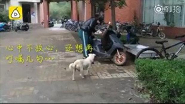 สุดซึ้ง แม่หมาจรจัดจูบลาลูกน้อย ได้คนใจดีรับไปเลี้ยง