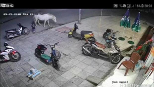 อย่าปล่อยเด็กน้อย อยู่กับม้าลำพัง อันตรายมาก