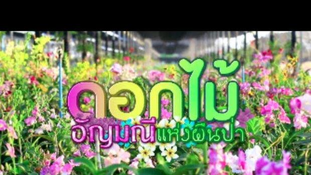 บางอ้อ : ดอกไม้ อัญมณีแห่งผืนป่า (29 พ.ค. 2559) 1/4