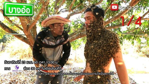 บางอ้อ :  (23 เม.ย.2560) II มนุษย์ผึ้ง 1 1/4