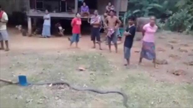 งูจงอางยักษ์ผัวเมีย เข้าบ้าน 2 ตัว สองวันซ้อน ชาวบ้านเชื่อเป็นงูทวดเจ้าที่