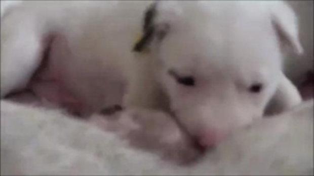 หมาแม่ลูกอ่อน แผลเน่าเฟะเลือดกอาบตัว โชคดีคนใจบุญช่วยเหลือจนรอดตาย