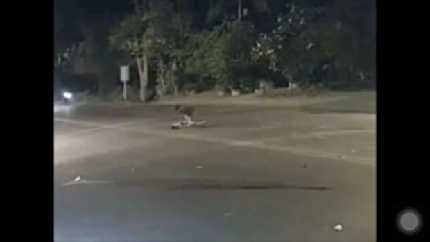 จยย.ชนกันกลางถนน กระบะเหยียบซ้ำติดใต้ท้องรถ ก่อนขับหนี