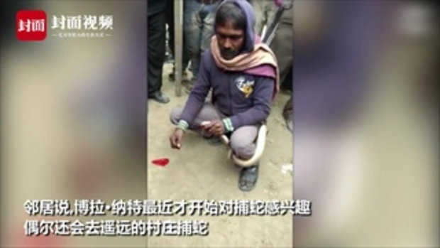 กรรมติดจรวด ชายอินเดียใช้เข็มเย็บปากงูเห่า สุดท้ายเจอแว้งกัดดับ