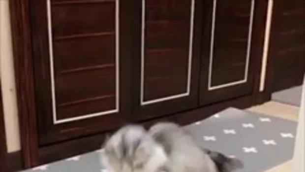 โชว์เสต็ปหลอกล่อ ตบหัวลูกหมา!
