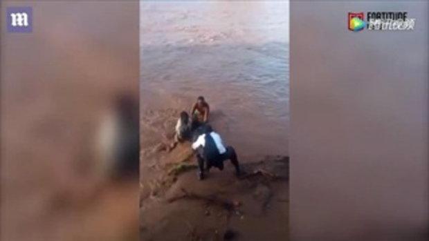 ระทึก 3 ชายใจกล้าโดดช่วยลูกช้างตกแม่น้ำที่มีจระเข้โผล่ลอยคอ