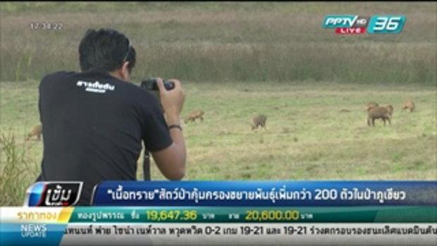 """""""เนื้อทราย"""" สัตว์ป่าคุ้มครองขยายพันธุ์เพิ่มกว่า 200 ตัวในป่าภูเขียว - เข้มข่าวค่ำ"""