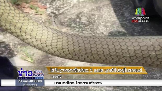 โร่จับงูจงอางยักษ์ยาว 5 เมตร บุกเข้าไปอยู่ในรถยนต์ l ข่าวเวิร์คพอยท์ เช้า l 29 ม.ค. 61