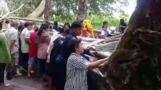 คุณยายมองไม่เห็น สาวชี้เลขที่ต้นมะเดื่อยักษ์ คำชะโนด ให้ดูชัดๆ