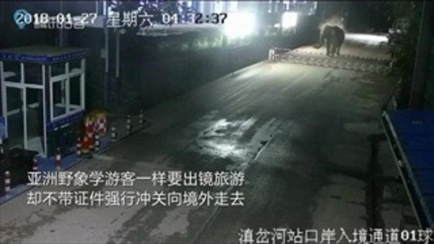 ช้างป่าเดินข้ามพรมแดนจากจีนไปลาว หายไป 2 ชั่วโมง ก่อนกลับมาเอง