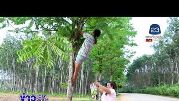 เทศบาลใจดีปลูกต้นตะลิงปลิงให้ชาวบ้านเก็บกินฟรี l ข่าวเวิร์คพอยท์ l 31 ม.ค. 61