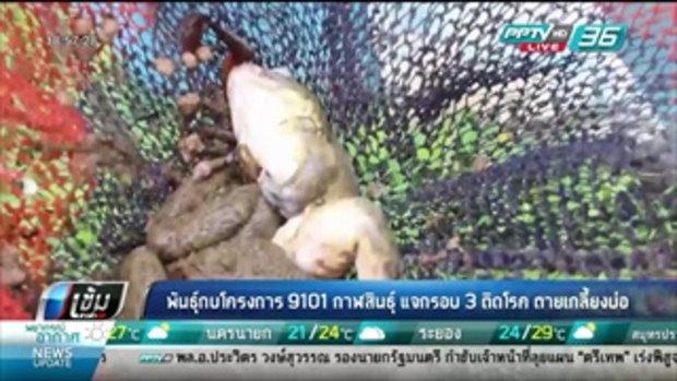 พันธุ์กบโครงการ 9101 กาฬสินธุ์ แจกรอบ 3 ติดโรค ตายเกลี้ยงบ่อ - เข้มข่าวค่ำ