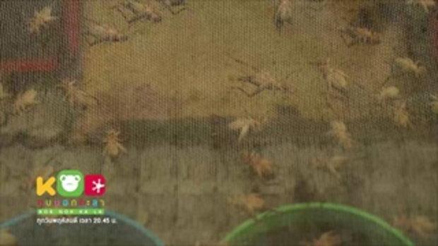 กบนอกกะลา : ฟาร์มแมลง แหล่งอาหารในอนาคฅ ช่วงที่ 2/4 (1 ก.พ.61)